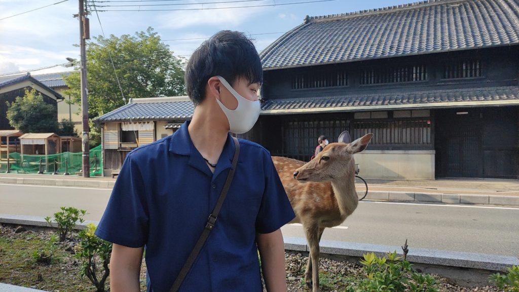 奈良公園の詩亜kと見つめあう