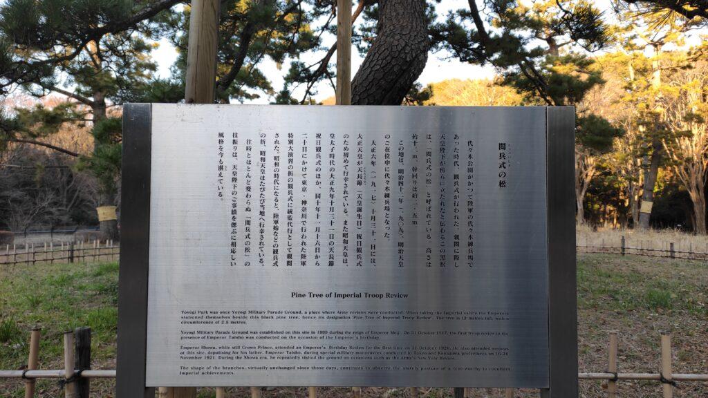 代々木公園の松