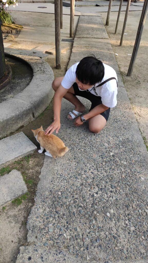天橋立の近くのお寺の猫