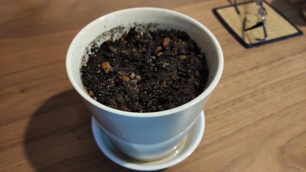 アイコの種を植えました(トマト)