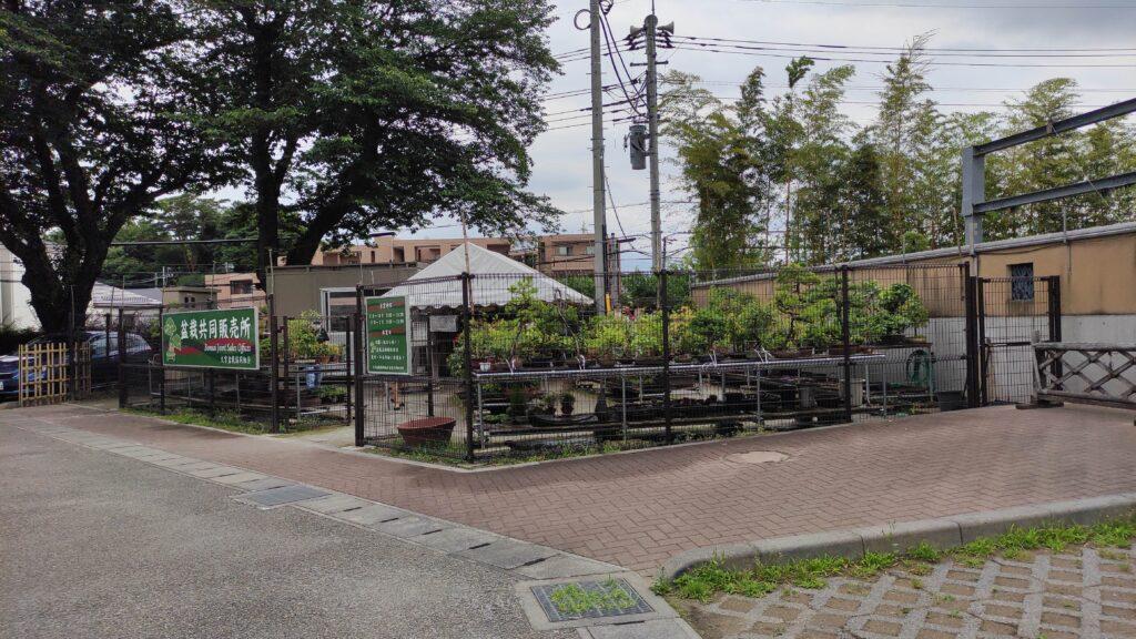 盆栽園の裏では盆栽が売っています