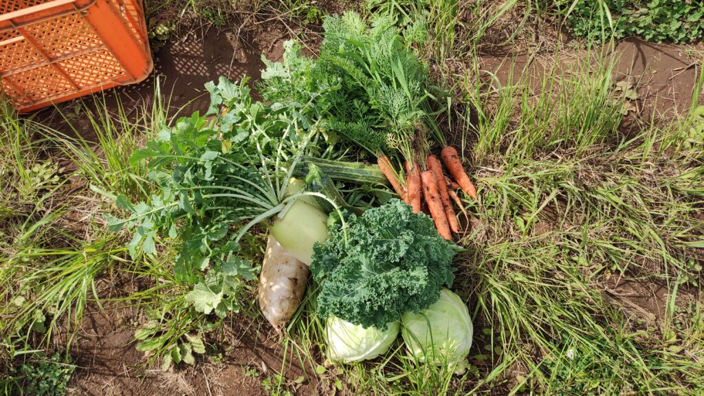 快晴食農さんからバイト代としてもらったお野菜!